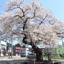 【春】桜イメージ