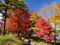夕焼の渚・紅葉祭り・昼間