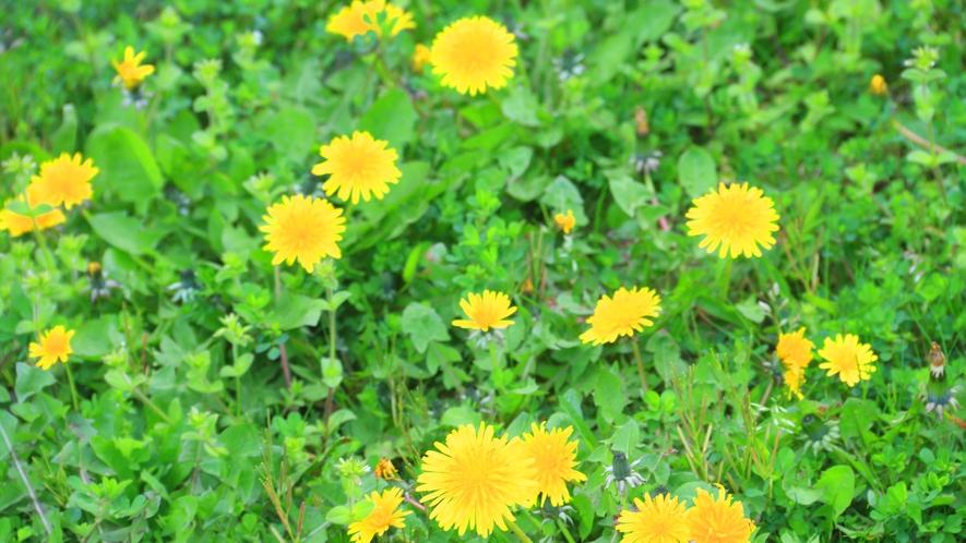 春を感じる庭の花♪