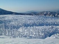 樹氷スノーシューハイク(南南東に歩いて45分のアザラシモンスター)03