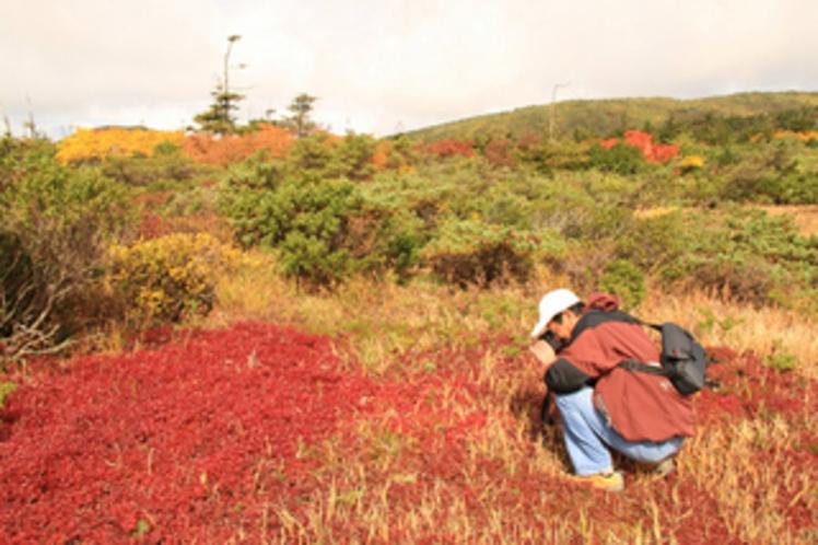 蔵王湿原の草紅葉(標高1550m)