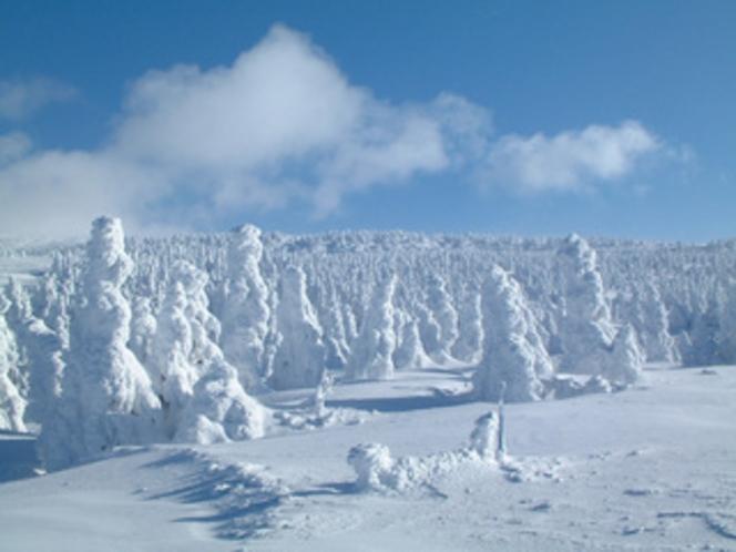 樹氷/ブナ林歩くスキーツアーコース