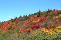 蔵王エコーラインの紅葉(標高1400m)