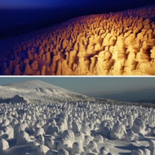樹氷ライトアップ(蔵王温泉)と樹氷スノーシュートレッキング(蔵王坊平)よくばりプラン