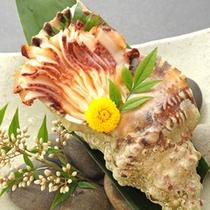 貝の種類も豊富な紀北です