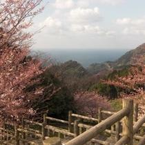 春の遊歩道2