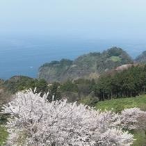 春の眺め3