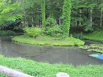 夜になると池の周りをホタルが飛び交います。20時台が見頃です。