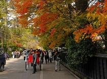 【秋】武家屋敷通り 人力車