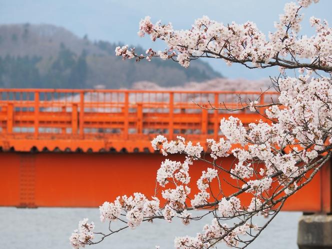 横町橋と桜