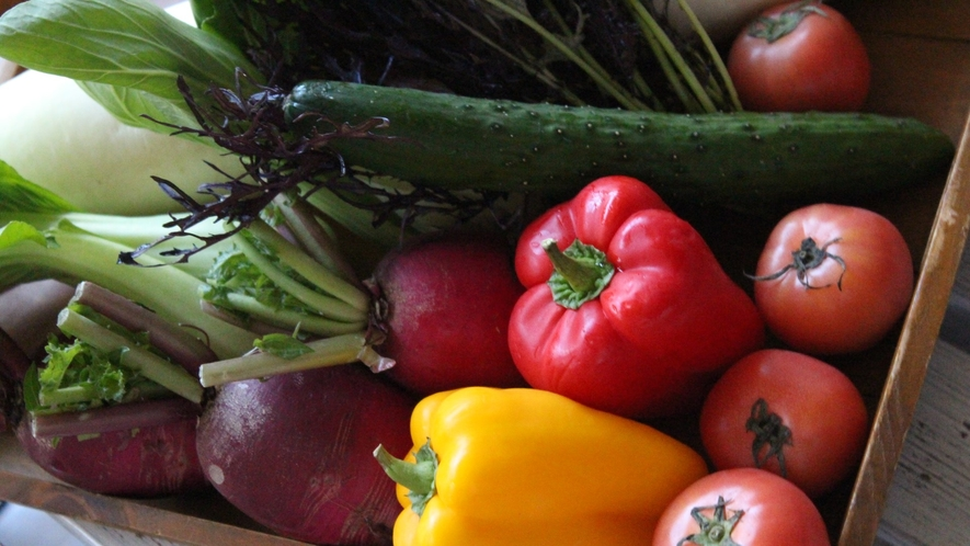 地産地消のお野菜