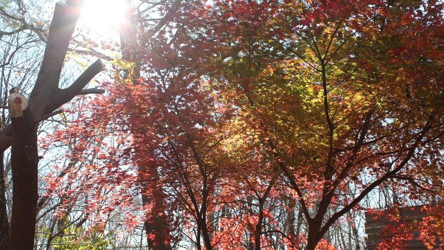 秋の紅葉は美しい