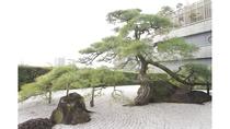 樹齢300年の縁起松「鶴亀」