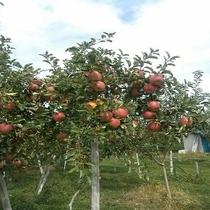 長野県と言えば、りんごの町