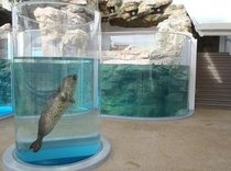 【京都水族館】ユーモラスの極み、ゴマフアザラシ。