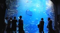 【京都水族館】「京の海」大水槽