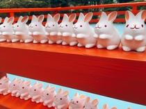【30分で行ける場所】安産、子授け、縁結び。岡崎神社の境内はうさぎがいっぱい。