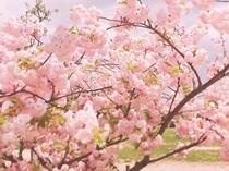 【梅小路公園】ホテルから徒歩約7分。季節の花と広い芝生、気持ちのいい公園です♪