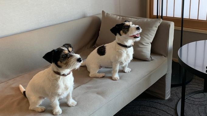 【ペットと宿泊(同伴2匹)】愛犬と一緒が嬉しいドッグフレンドリーホテルステイ(ルームサービス朝食付)