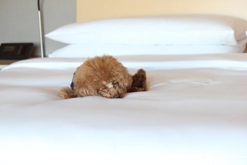 【禁煙】ドッグフレンドリープレミアコーナーツイン57.8平米
