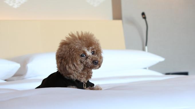 【ペットと宿泊(同伴1匹)】愛犬と一緒が嬉しいドッグフレンドリーホテルステイ(ルームサービス朝食付)