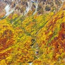 黒部ダムの秋