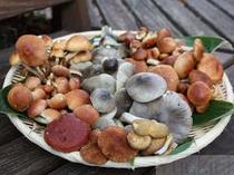 オーナーは「きのこアドバイザー」。秋には 天然の きのこ料理も ご用意いたします。