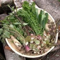 春は山菜。オーナー手摘みの新鮮な山の幸をご満喫いただけます。