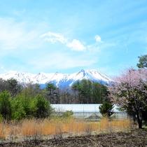 *[近隣風景/御嶽山(春)]例年見頃は4月下旬~5月上旬頃