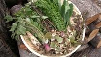 *春は山菜。オーナー手摘みの新鮮な山の幸をご満喫いただけます。