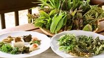 *【山菜オードブル】朝採れ&丁寧にアク抜き調理した素朴で懐かしい山の春の味をご用意します。