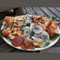 オーナーは「きのこアドバイザー(登録352号)」。秋にはもちろん天然のきのこ料理もご用意いたします。