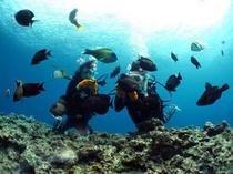 体験ダイビング&青の洞窟ツアー