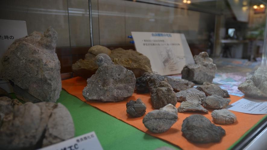 世界ジオパーク 伊豆 化石・岩石展示