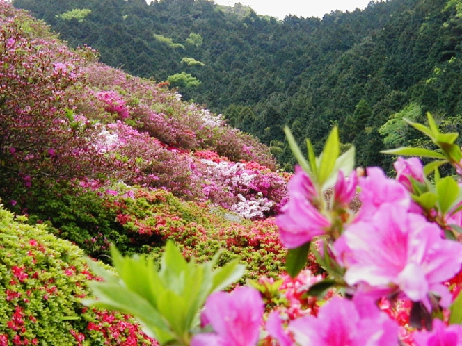 姫の沢公園花まつり
