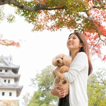 【洲本城】春には桜。秋には紅葉の名所に