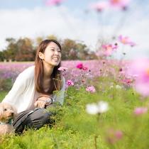 【あわじ花さじき】広大な敷地に四季折々の花々が咲き乱れる。