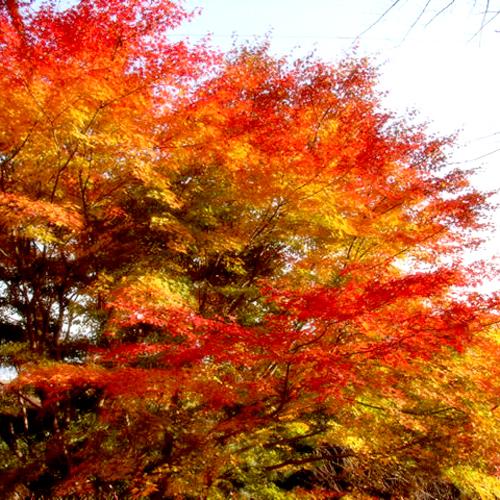 *木曽路の美しい紅葉
