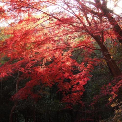 岩倉峡紅葉