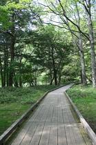 湯の湖畔にある遊歩道