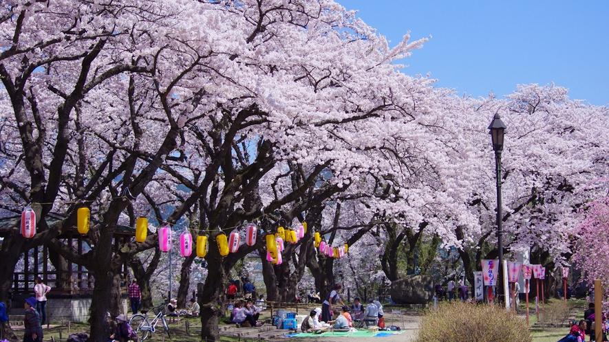 *【周辺】桂城公園/大館市を代表する桜の名所。当館より車で15分。