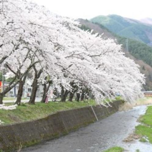 ■桜木町小川川沿い
