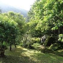 客室の前の庭