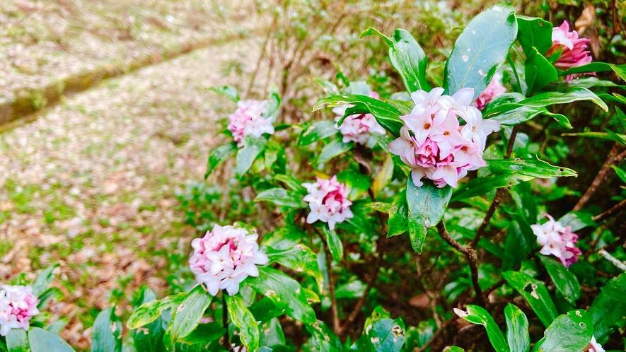 【自然】たくさんの野の花が咲いている庭