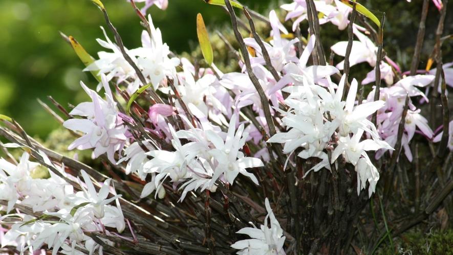四季折々の草花