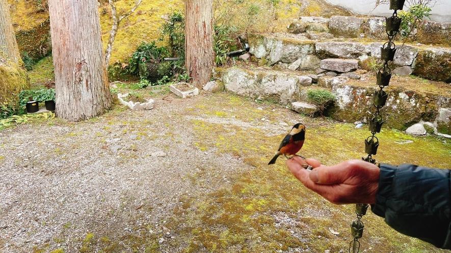 野鳥をご覧いただけます