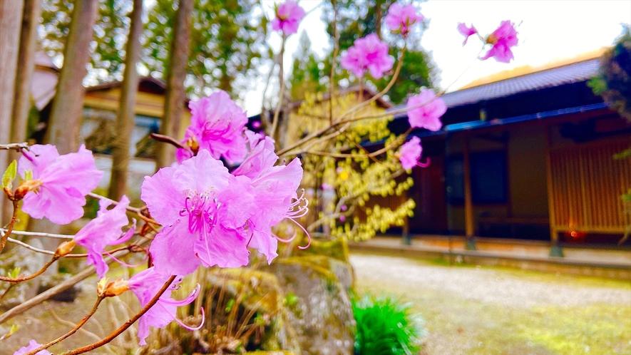 【自然】ゲンカイツツジなどの花々が咲く