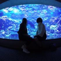 【ないとつあー】幻想的な夜の水族館♪昼とは違う夜のうみたまごをご体験下さい!