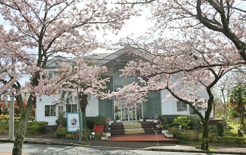 ペンション外観と桜