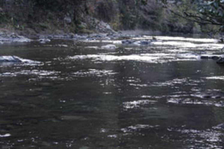 付近の渓流(鮎&アマゴ釣り良好魚場)
